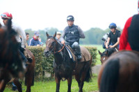 Chantilly 01/09/2015 Entrainement Tr�ve, New Bay et Territories.